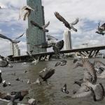 วิธีป้องกันนกพิราบบริเวณที่พักอาศัยของคุณ